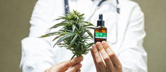 Cannabis médical