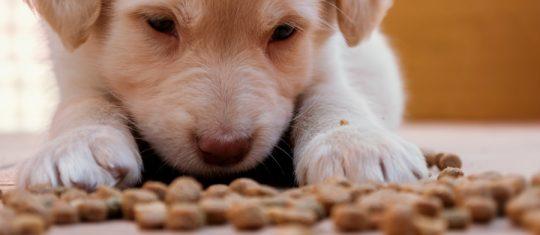 croquettes de chien